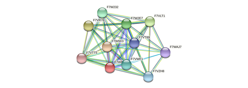 SMAC_07268 protein (Sordaria macrospora) - STRING interaction network