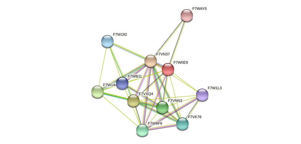 SMAC_03954 protein (Sordaria macrospora) - STRING interaction network