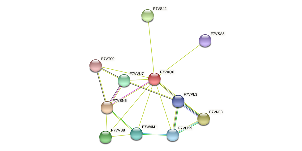 SMAC_02878 protein (Sordaria macrospora) - STRING interaction network