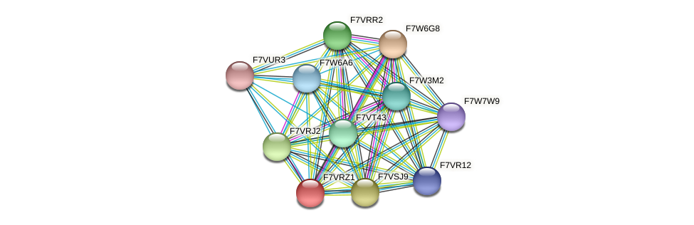SMAC_01825 protein (Sordaria macrospora) - STRING interaction network