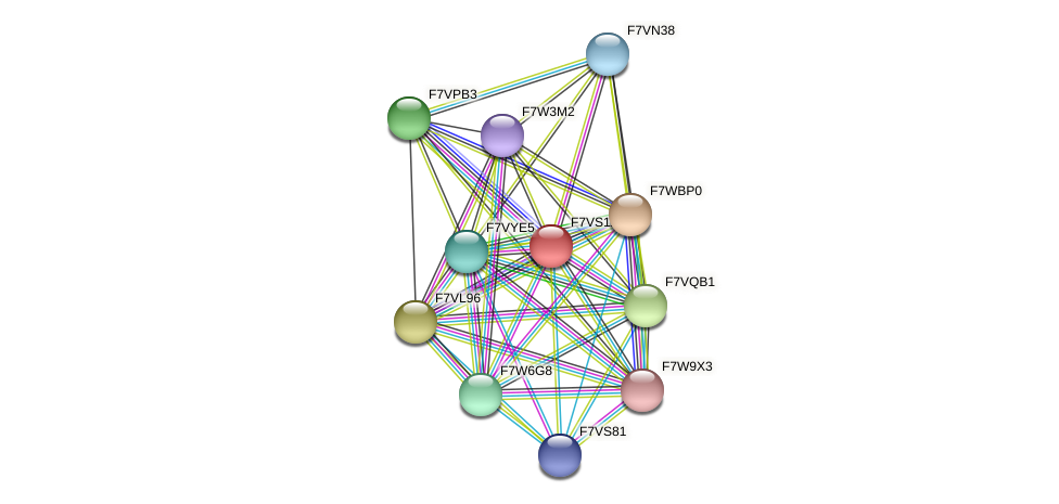 SMAC_01845 protein (Sordaria macrospora) - STRING interaction network
