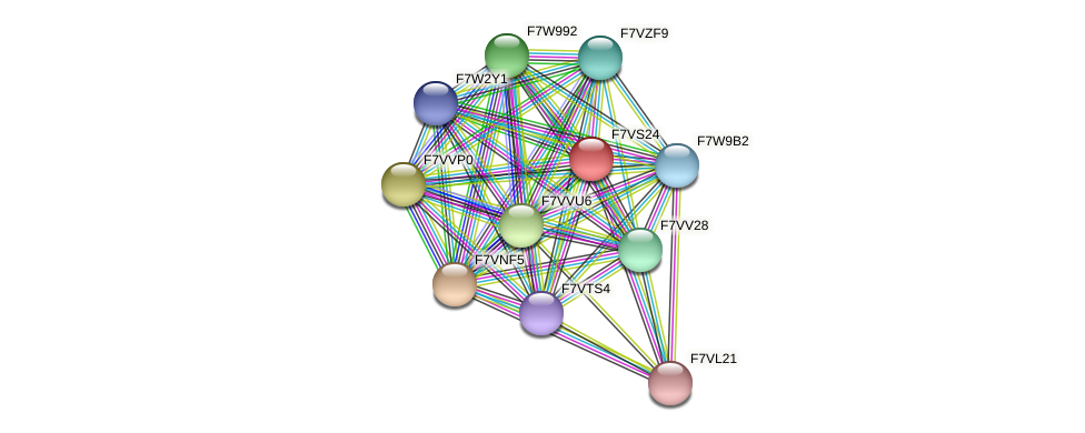 SMAC_01858 protein (Sordaria macrospora) - STRING interaction network