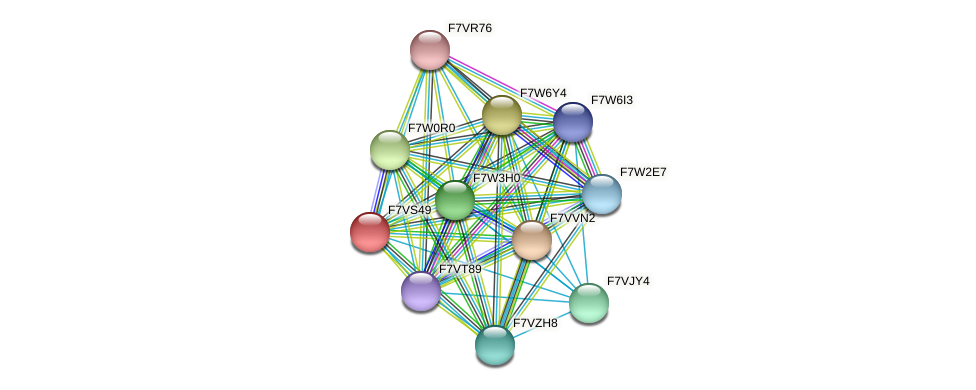 SMAC_01882 protein (Sordaria macrospora) - STRING interaction network