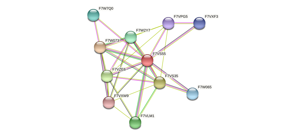 SMAC_01888 protein (Sordaria macrospora) - STRING interaction network