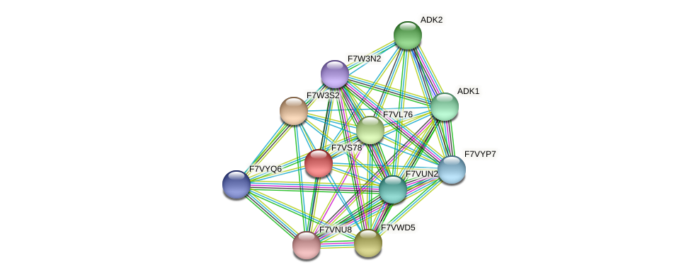 SMAC_01912 protein (Sordaria macrospora) - STRING interaction network