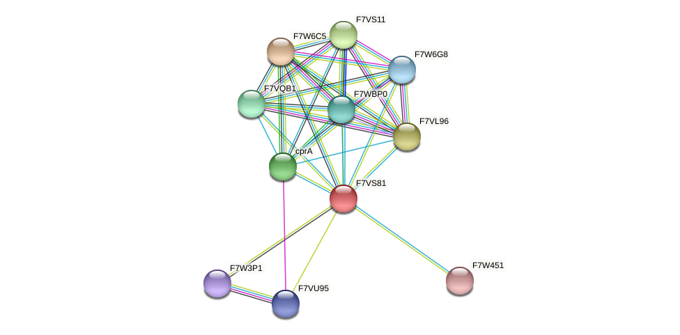 SMAC_12071 protein (Sordaria macrospora) - STRING interaction network