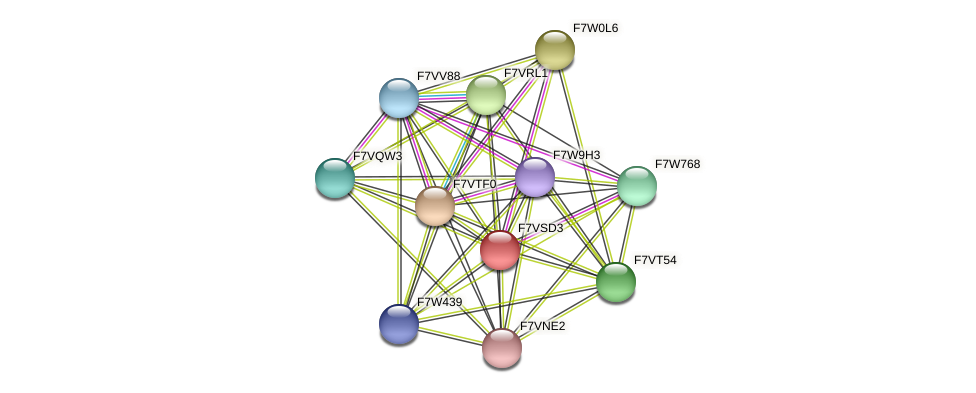 SMAC_01963 protein (Sordaria macrospora) - STRING interaction network