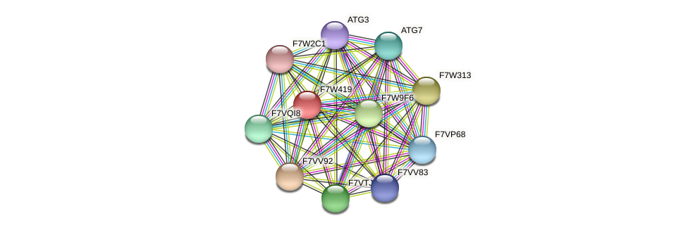 SMAC_05551 protein (Sordaria macrospora) - STRING interaction network