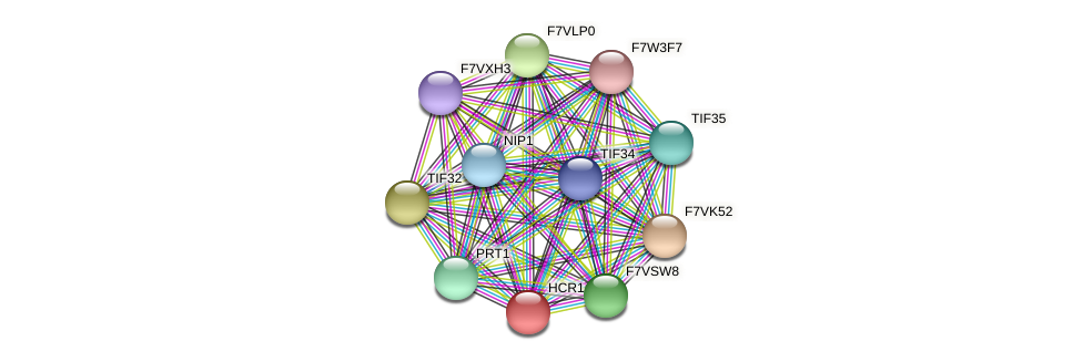 HCR1 protein (Sordaria macrospora) - STRING interaction network