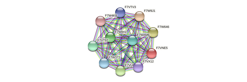 SMAC_00900 protein (Sordaria macrospora) - STRING interaction network