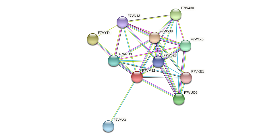 SMAC_01086 protein (Sordaria macrospora) - STRING interaction network