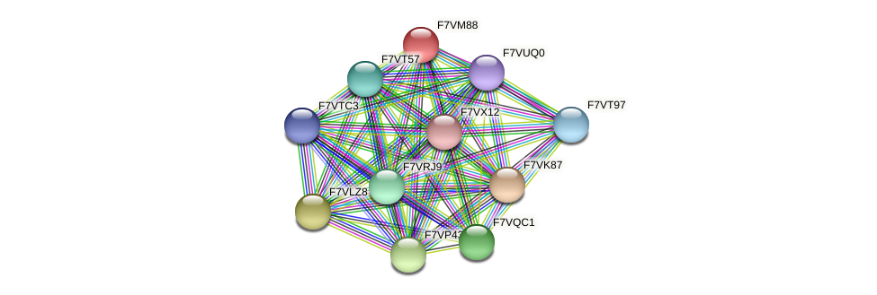 SMAC_01092 protein (Sordaria macrospora) - STRING interaction network