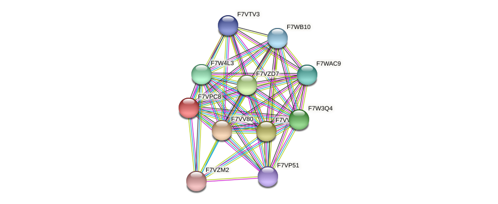 SMAC_02363 protein (Sordaria macrospora) - STRING interaction network