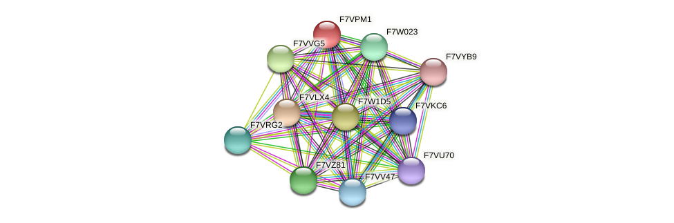 SMAC_02455 protein (Sordaria macrospora) - STRING interaction network
