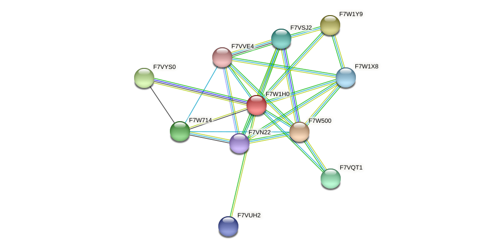 SMAC_04312 protein (Sordaria macrospora) - STRING interaction network