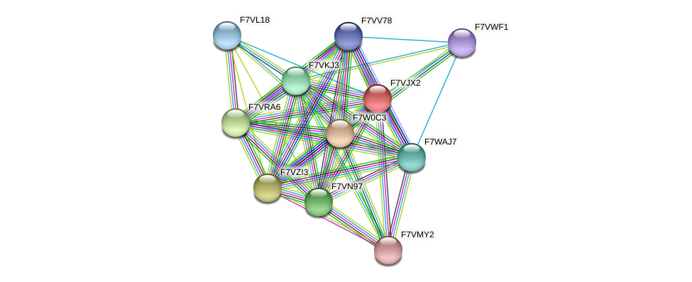 SMAC_00014 protein (Sordaria macrospora) - STRING interaction network
