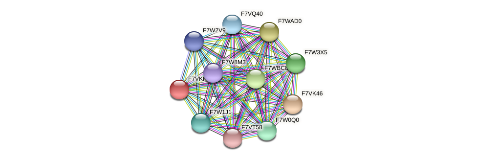 SMAC_00198 protein (Sordaria macrospora) - STRING interaction network