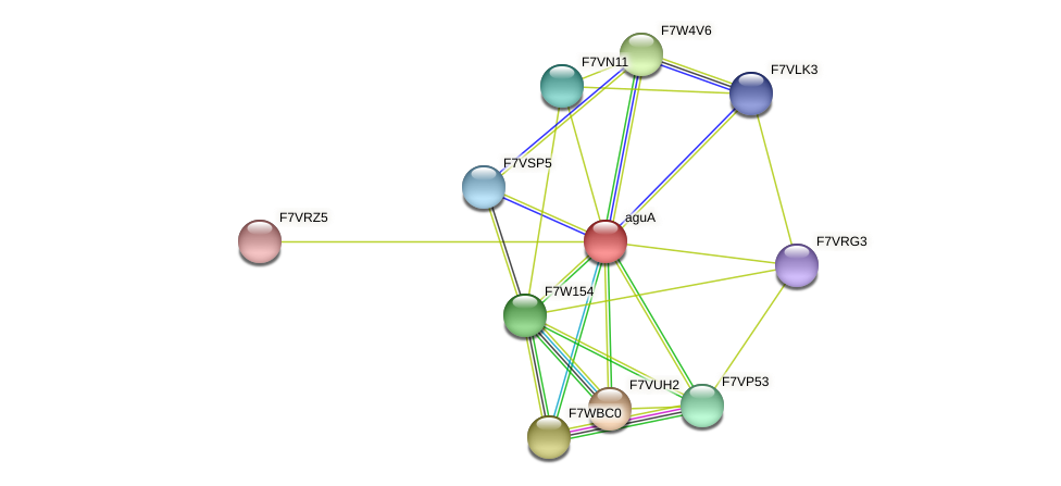 aguA protein (Sordaria macrospora) - STRING interaction network