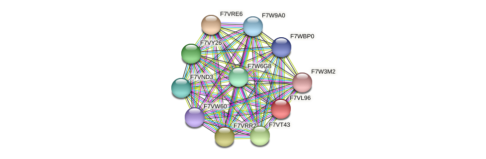 SMAC_00490 protein (Sordaria macrospora) - STRING interaction network