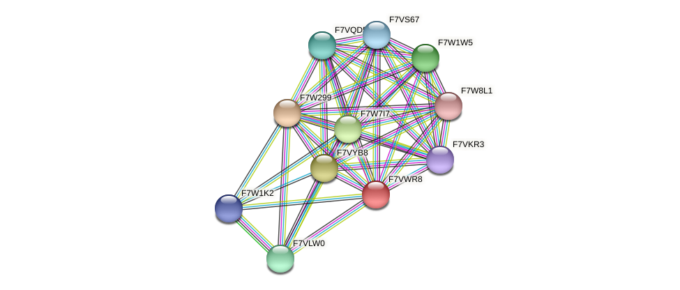 SMAC_02539 protein (Sordaria macrospora) - STRING interaction network