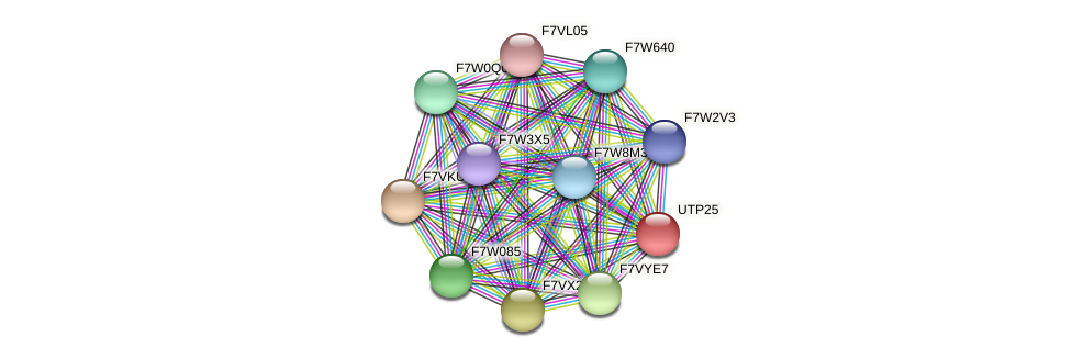 UTP25 protein (Sordaria macrospora) - STRING interaction network