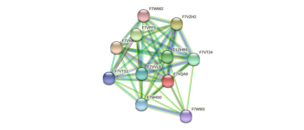 SMAC_01258 protein (Sordaria macrospora) - STRING interaction network