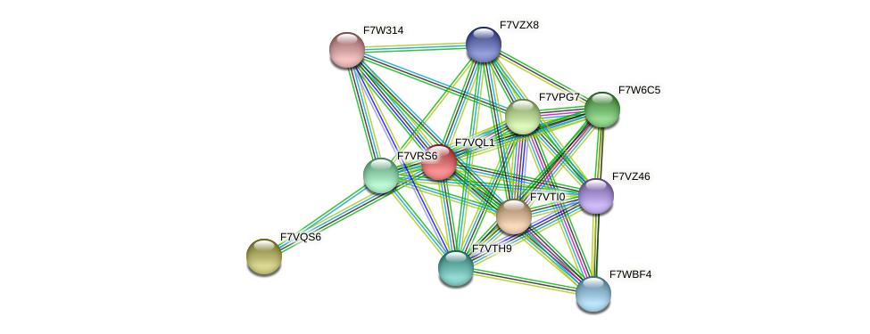 SMAC_01359 protein (Sordaria macrospora) - STRING interaction network