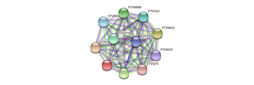 SMAC_01420 protein (Sordaria macrospora) - STRING interaction network