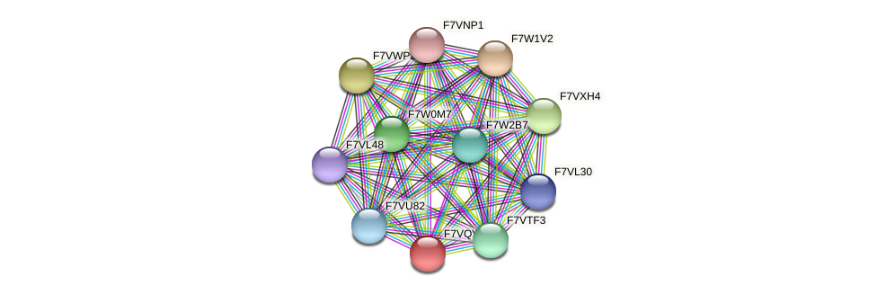 SMAC_01453 protein (Sordaria macrospora) - STRING interaction network