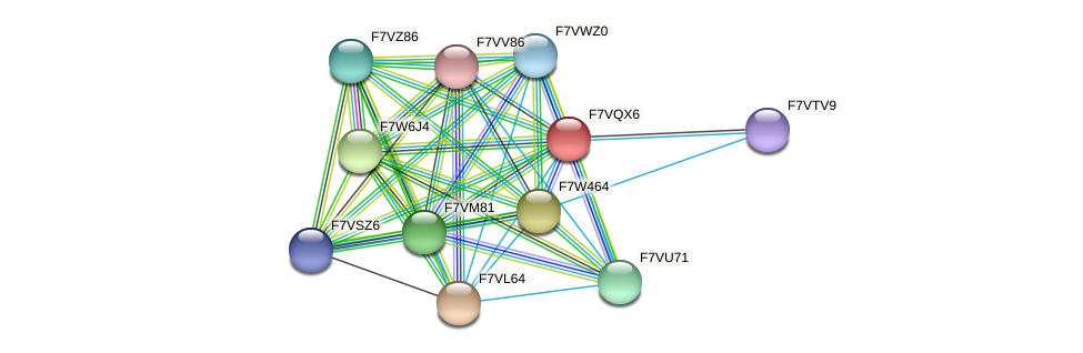 SMAC_01473 protein (Sordaria macrospora) - STRING interaction network
