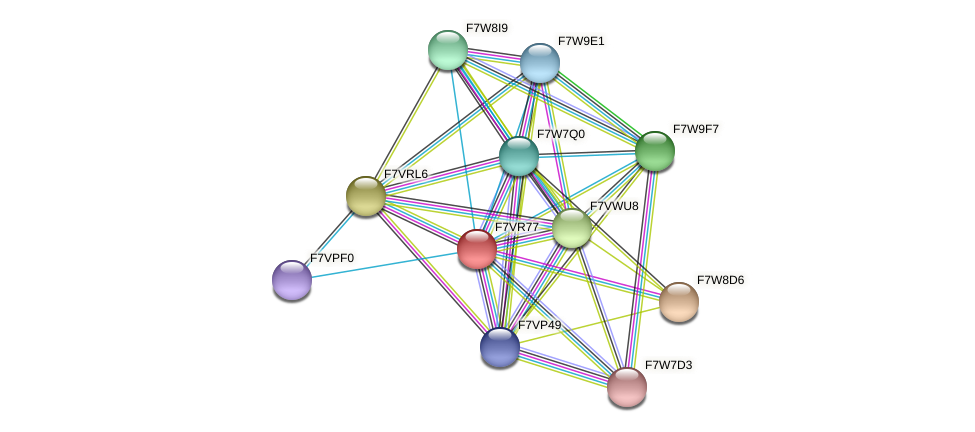 SMAC_01575 protein (Sordaria macrospora) - STRING interaction network