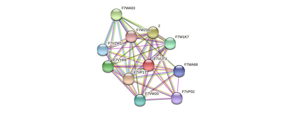 SMAC_05037 protein (Sordaria macrospora) - STRING interaction network
