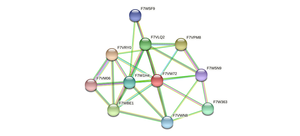 SMAC_03450 protein (Sordaria macrospora) - STRING interaction network