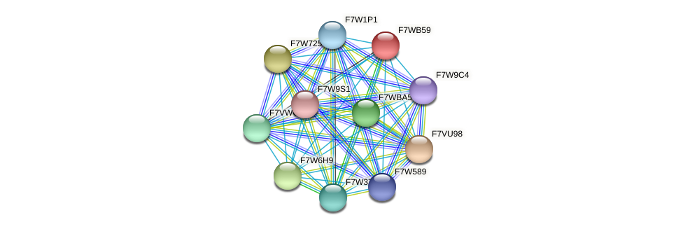 SMAC_08936 protein (Sordaria macrospora) - STRING interaction network