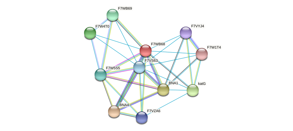 SMAC_08947 protein (Sordaria macrospora) - STRING interaction network
