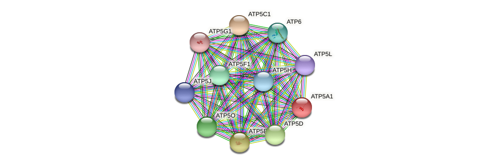 ATP5A1 protein (Latimeria chalumnae) - STRING interaction network