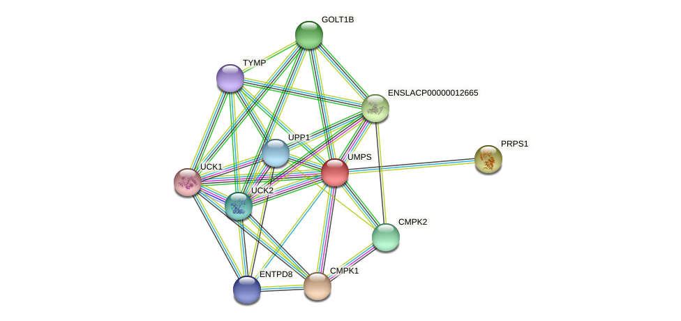 UMPS protein (Latimeria chalumnae) - STRING interaction network