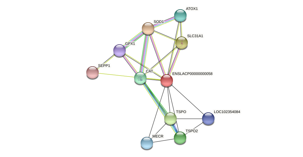 ENSLACG00000000051 protein (Latimeria chalumnae) - STRING interaction network