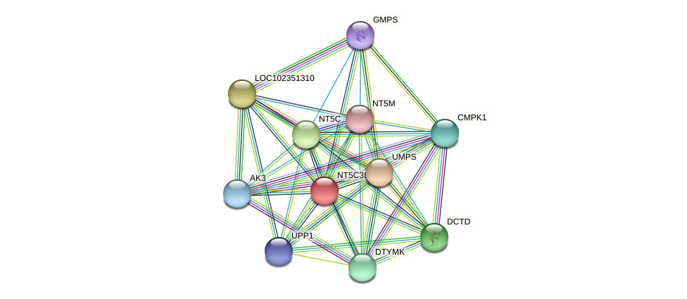 NT5C3L protein (Latimeria chalumnae) - STRING interaction network