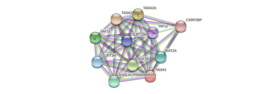 TADA3 protein (Latimeria chalumnae) - STRING interaction network