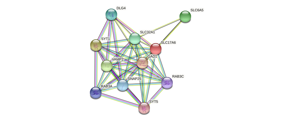 SLC17A6 protein (Latimeria chalumnae) - STRING interaction network