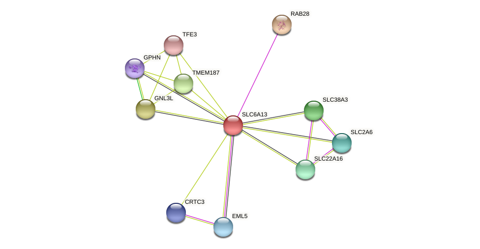 SLC6A13 protein (Latimeria chalumnae) - STRING interaction network