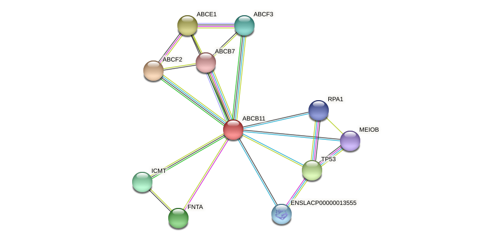 ABCB11 protein (Latimeria chalumnae) - STRING interaction network