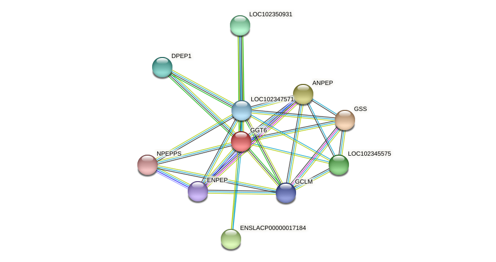 GGT6 protein (Latimeria chalumnae) - STRING interaction network
