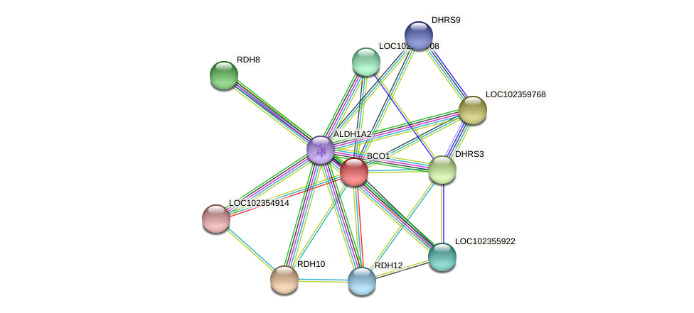 BCMO1 protein (Latimeria chalumnae) - STRING interaction network