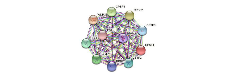CPSF1 protein (Latimeria chalumnae) - STRING interaction network