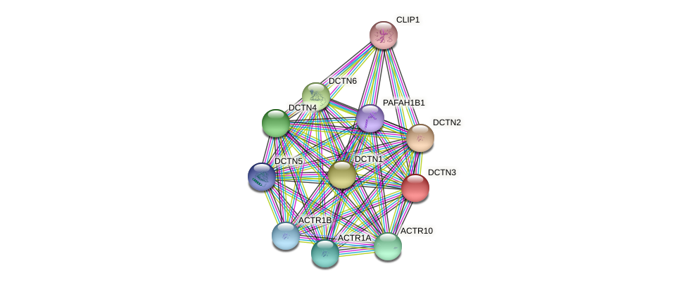 DCTN3 protein (Latimeria chalumnae) - STRING interaction network