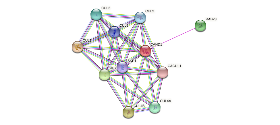 CAND1 protein (Latimeria chalumnae) - STRING interaction network