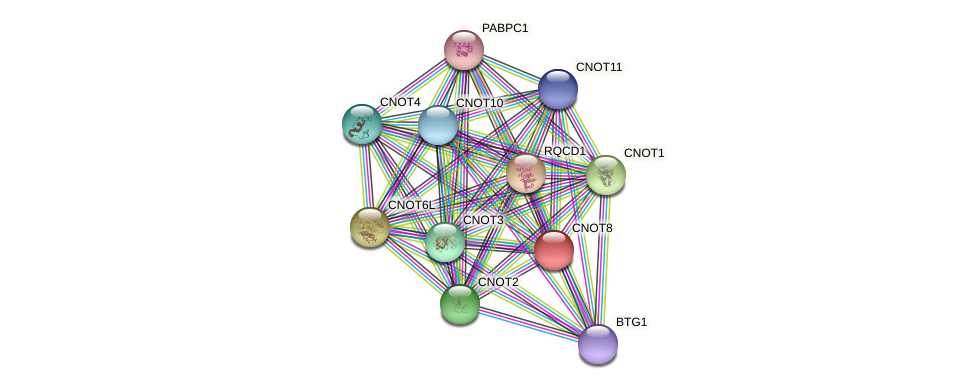 CNOT8 protein (Latimeria chalumnae) - STRING interaction network
