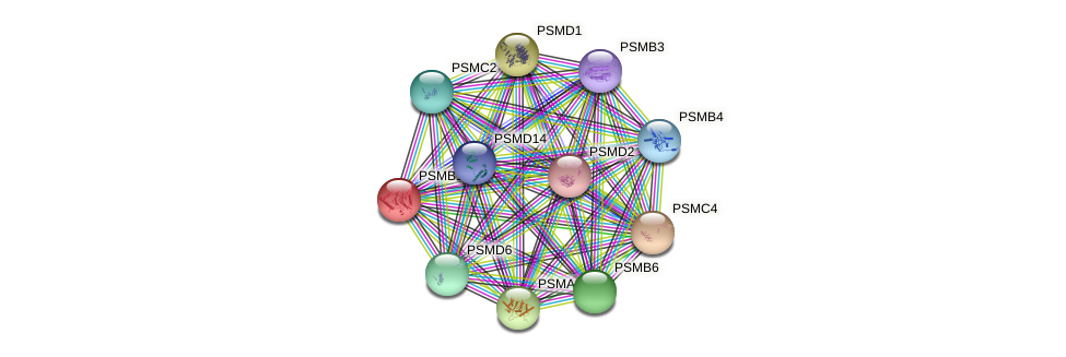 PSMB1 protein (Latimeria chalumnae) - STRING interaction network